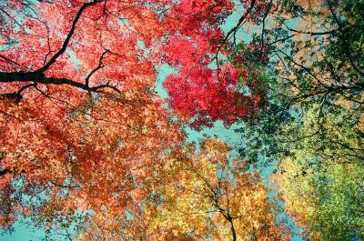 9月の紅葉の季節