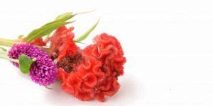 センニチコウの花束