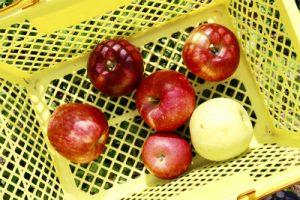 様々なりんご