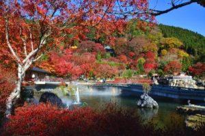 美しい勝尾寺の紅葉