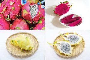 dragon fruits (7) (1)